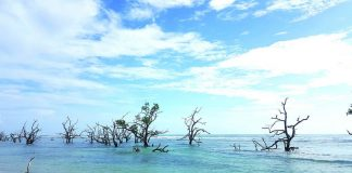 The dead-looking mangroves and eye-catching driftwood along the shores of Baganga's Sunrise Boulevard demanded us to step down from our vehicle and explore a little.