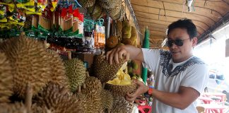 DURIAN BACK. A trader rips open a Durian fruit for customers at his fruit stall outside Magsaysay Park in Davao City yesterday. Thousands of foreign and domestic tourists are expected to arrive in the city to taste the exotic Durian fruit and to experience the vibe of the 80th Araw ng Davao festival which will kick off tomorrow at Rizal Park. LEAN DAVAL JR.