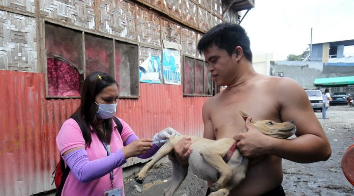BESTFRIEND.A dog owner holds his pet while Michelle Galo of the City Veterinarian Office injects anti-rabies vaccine during a free vaccination for dogs and cats in Barangay 28-C, Juan Luna Street, Davao City yesterday. LEAN DAVAL JR.