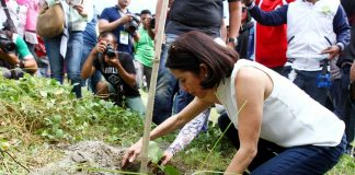 ALL OVER. Environment Secretary Gina Lopez plants a tree at a marshy village in Pandag town of Maguindanao on Wednesday. Lopez was in the province for the launching of the Sustainable Agriculture Integrated Development program in Liguasan Marsh.