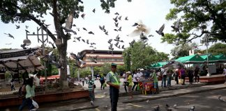 BIRD MAN. A City Transport and Traffic Management Office (CTTMO) traffic enforcer spends his break feeding the pigeons with bread at Rizal Park in Davao City on Tuesday. Lean Daval Jr.