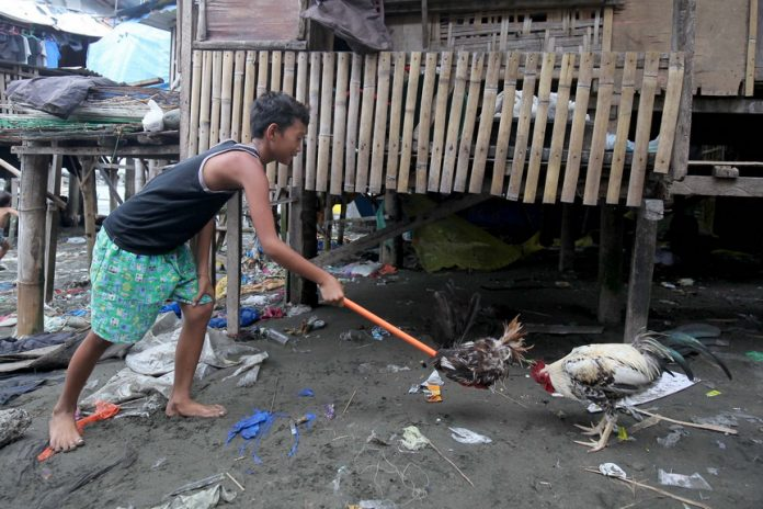 BONING UP ON THE JOB. A boy trains a rooster using a human-handled cock dummy at a Badjao community in Brgy. 23-C Isla Verde in Davao City on Tuesday. LEAN DAVAL JR.