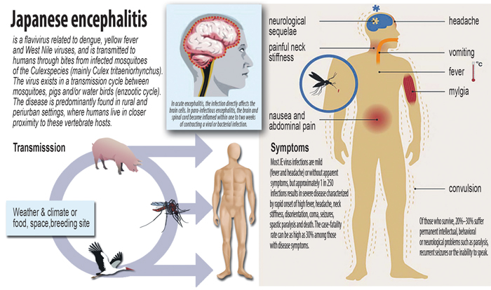 a study of the japanese encephalitis