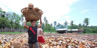 NOT ENOUGH. A worker carries a basket of coconut which will be hauled to a vehicle at a coconut plantation in Sta. Cruz, Davao del Sur. Producers of coconut byproducts like coco water are now feeling the effects of the low supply of coconut fruits as it could not cope up with the growing demand from their foreign customers. LEAN DAVAL JR.