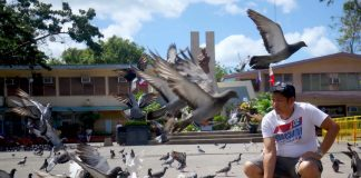 PARK'S ATTRACTION. A resident spends his Saturday morning feeding the pigeons at Rizal Park in Davao City. The park's hundreds of pigeons became an attraction of the area especially during weekends. LEAN DAVAL JR.