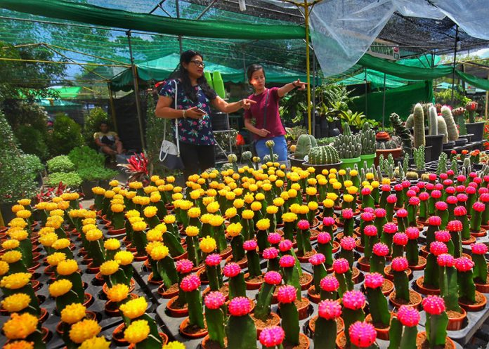 GARDEN FAIR. Visitors check out the ornamental and farm plants on display at SM City Davao's Farm and Garden Fair 2018. LEAN DAVAL JR