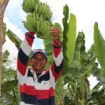 Banana Boost. KIFAPCO Manager Reden G. Arsenal proudly shows the fruit of their hard labor. The establishment of two-hectare bananalakatan plantation and buying station is expected to elevate agricultural production of banana industry in Veruela, Agusan del Sur with support under the PRDP's enterprise development worth P928,595.13 (Photo by Alfred Abrea/RPCO 13)