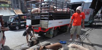 ASF outbreak an opportunity for hog raisers of Mindanao