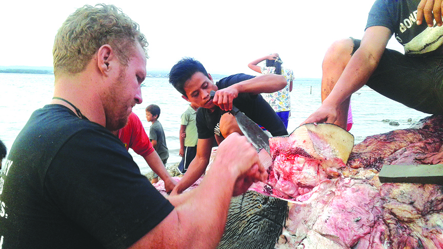 PAINSTAKING JOB. Darrell Blatchley (left) of the Bone Collector Museum in Davao City meticulously removes the skin and flesh of the dead seven-year old, 38-feet long male sperm whale that was discovered in Samal Island, Davao del Norte on Saturday. ALEXANDER D. LOPEZ