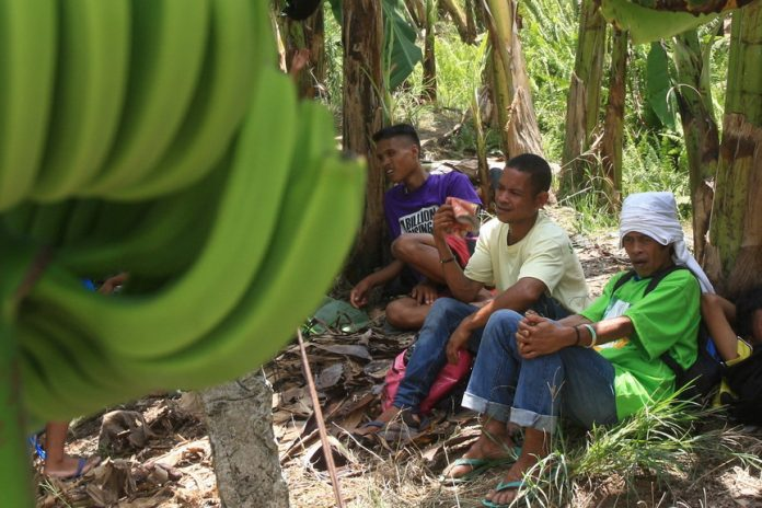 Farmers of Madaum Agrarian Reform Beneficiaries Inc. rest under banana plants after they were installed at the plantation in Madaum, Tagum City managed by Lapanday Foods Corporation on Thursday, 18 May 2017. MindaNews photo by Manman Dejeto