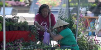 PICKING FLOWERS. An elderly woman chooses from a wide array of flowers being sold at a makeshift stall at Rizal Park's organic market on Thursday. LEAN DAVAL JR.